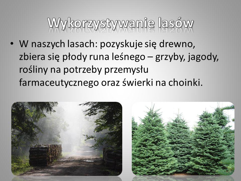 W naszych lasach: pozyskuje się drewno, zbiera się płody runa leśnego – grzyby, jagody, rośliny na potrzeby przemysłu farmaceutycznego oraz świerki na choinki.