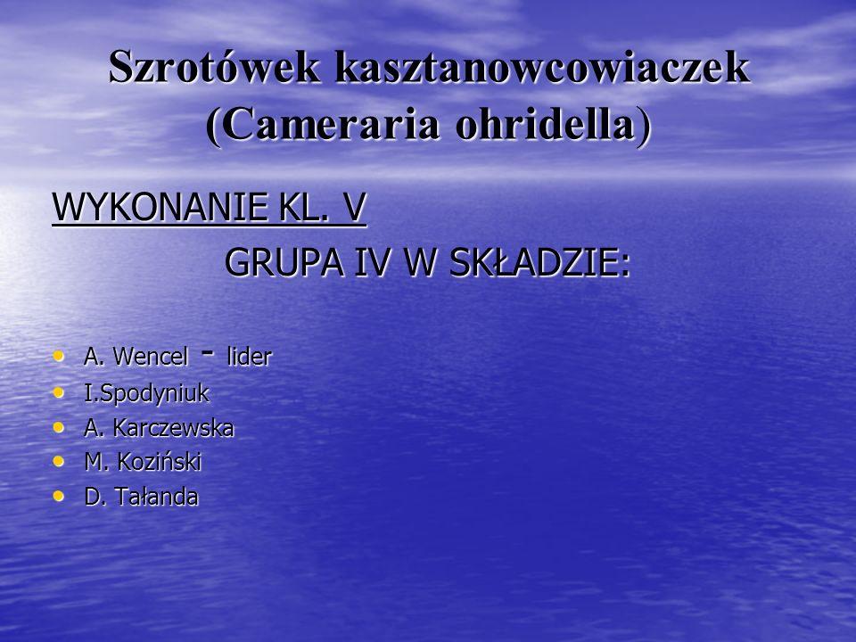 Szrotówek kasztanowcowiaczek (Cameraria ohridella) WYKONANIE KL. V GRUPA IV W SKŁADZIE: A. Wencel - lider A. Wencel - lider I.Spodyniuk I.Spodyniuk A.