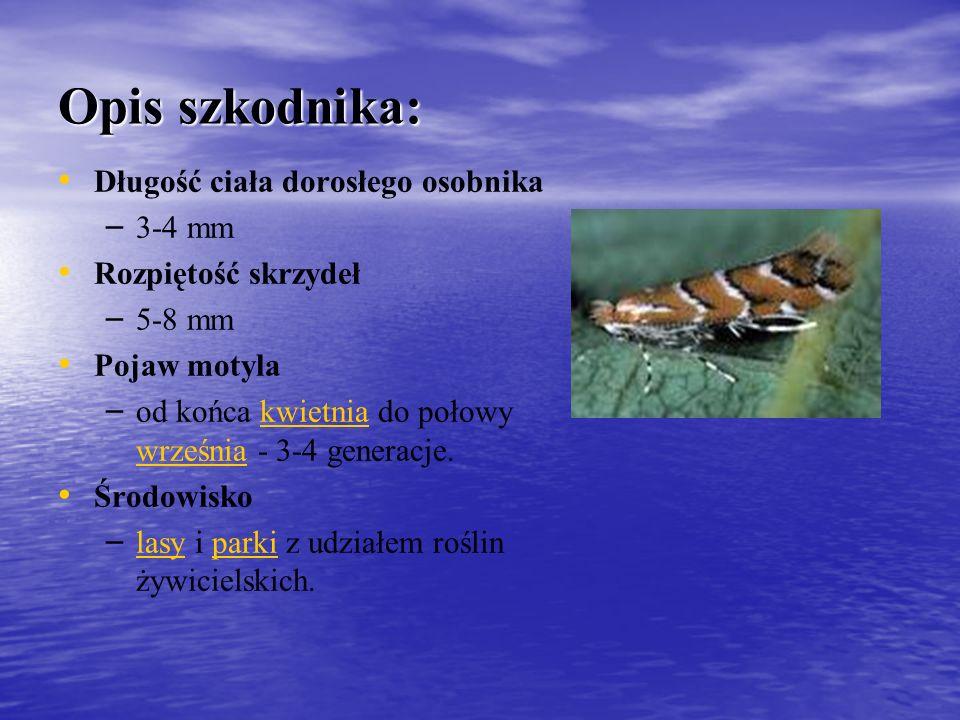 Opis szkodnika: Długość ciała dorosłego osobnika – – 3-4 mm Rozpiętość skrzydeł – – 5-8 mm Pojaw motyla – – od końca kwietnia do połowy września - 3-4