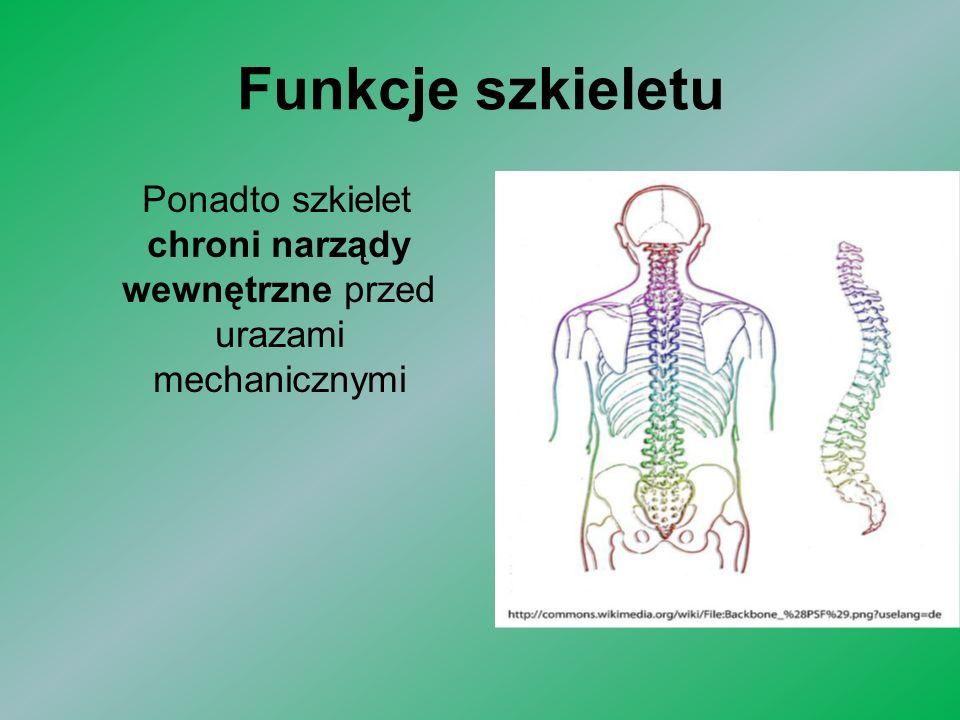 Funkcje szkieletu Ponadto szkielet chroni narządy wewnętrzne przed urazami mechanicznymi