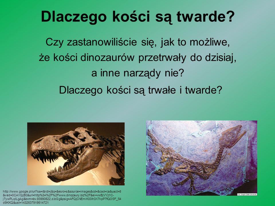 Dlaczego kości są twarde? Czy zastanowiliście się, jak to możliwe, że kości dinozaurów przetrwały do dzisiaj, a inne narządy nie? Dlaczego kości są tr