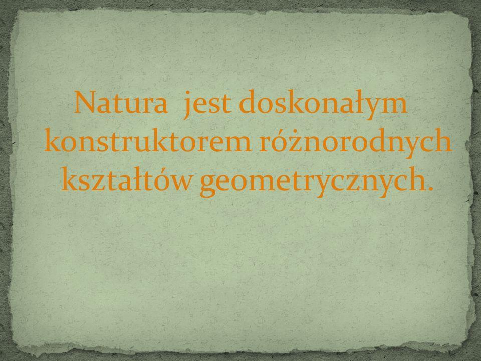 Natura jest doskonałym konstruktorem różnorodnych kształtów geometrycznych.