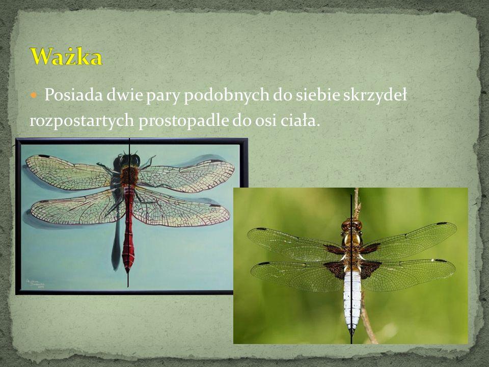 Dwukropka, siedmiokropka, czternastokropka mają symetrycznie ułożone koliste plamy na pokrywach skrzydeł.