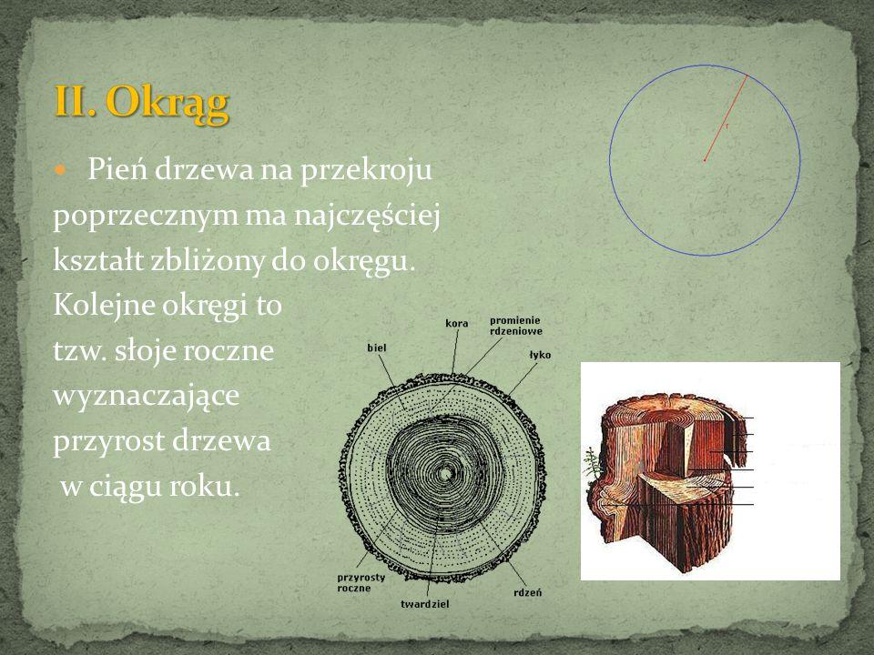 Ciało żmii zygzakowatej pokrywają regularne elipsowate łuski.