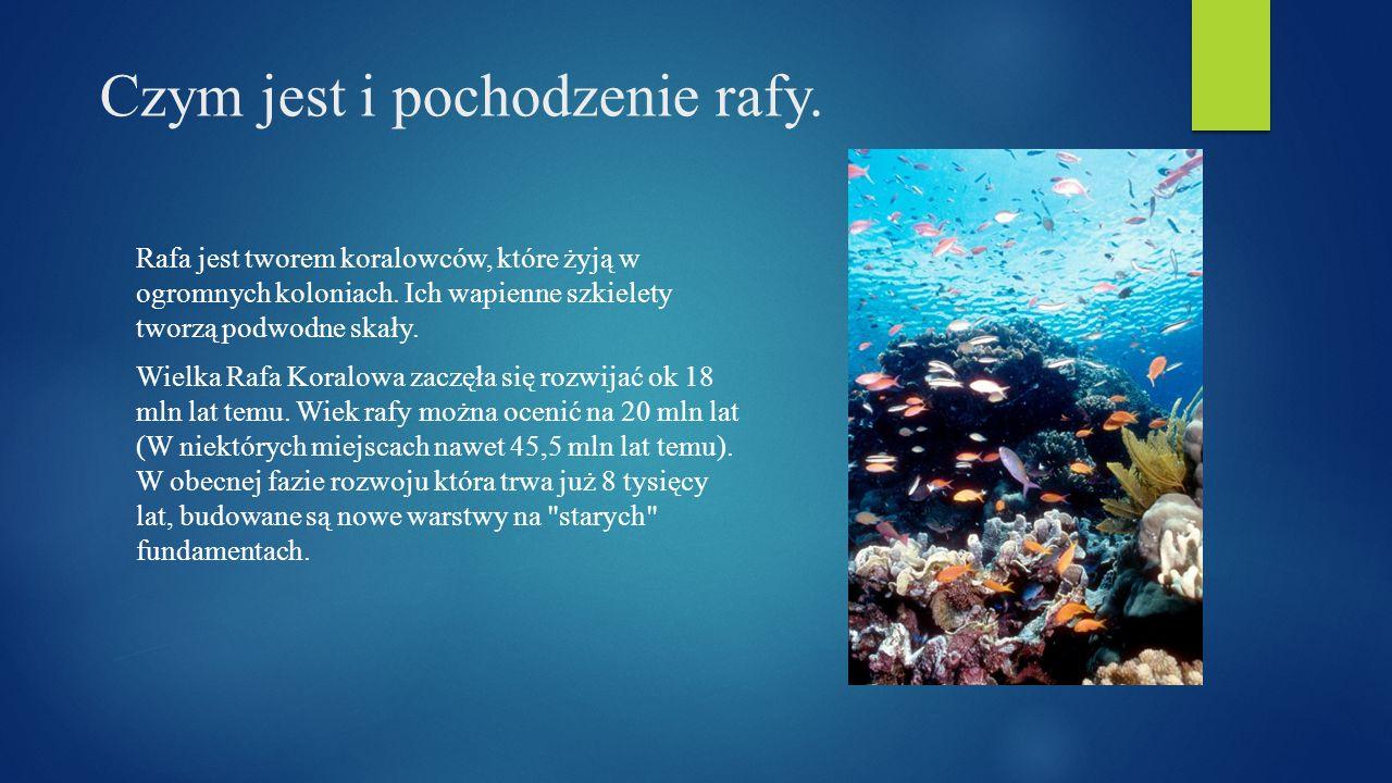 Czym jest i pochodzenie rafy. Rafa jest tworem koralowców, które żyją w ogromnych koloniach. Ich wapienne szkielety tworzą podwodne skały. Wielka Rafa
