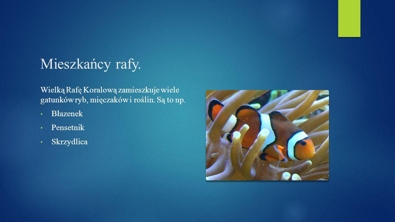 Mieszkańcy rafy. Wielką Rafę Koralową zamieszkuje wiele gatunków ryb, mięczaków i roślin. Są to np. Błazenek Pensetnik Skrzydlica