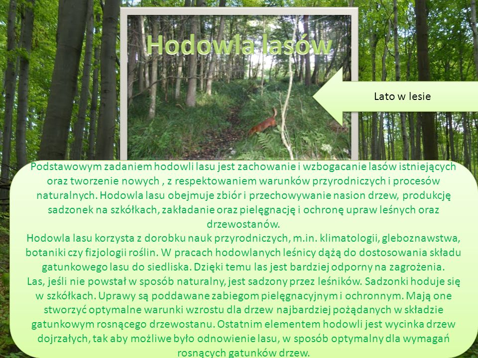 Podstawowym zadaniem hodowli lasu jest zachowanie i wzbogacanie lasów istniejących oraz tworzenie nowych, z respektowaniem warunków przyrodniczych i procesów naturalnych.