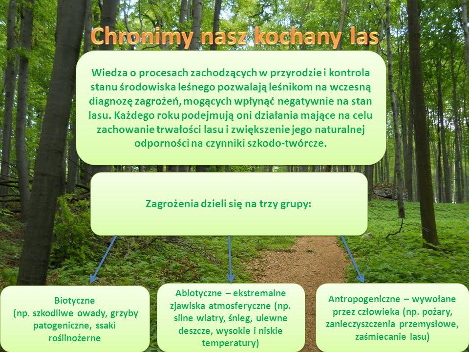 Wiedza o procesach zachodzących w przyrodzie i kontrola stanu środowiska leśnego pozwalają leśnikom na wczesną diagnozę zagrożeń, mogących wpłynąć negatywnie na stan lasu.