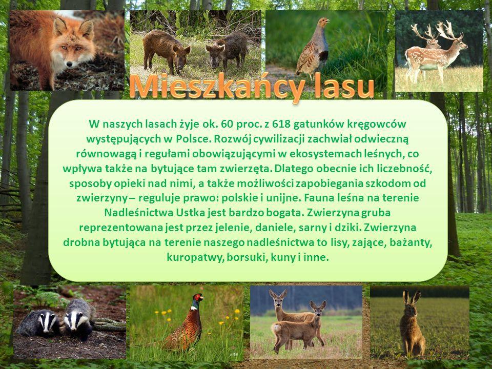 W naszych lasach żyje ok. 60 proc. z 618 gatunków kręgowców występujących w Polsce.