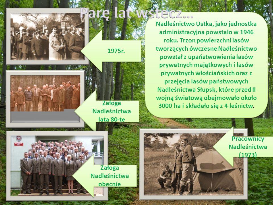 Nadleśnictwo Ustka, jako jednostka administracyjna powstało w 1946 roku.