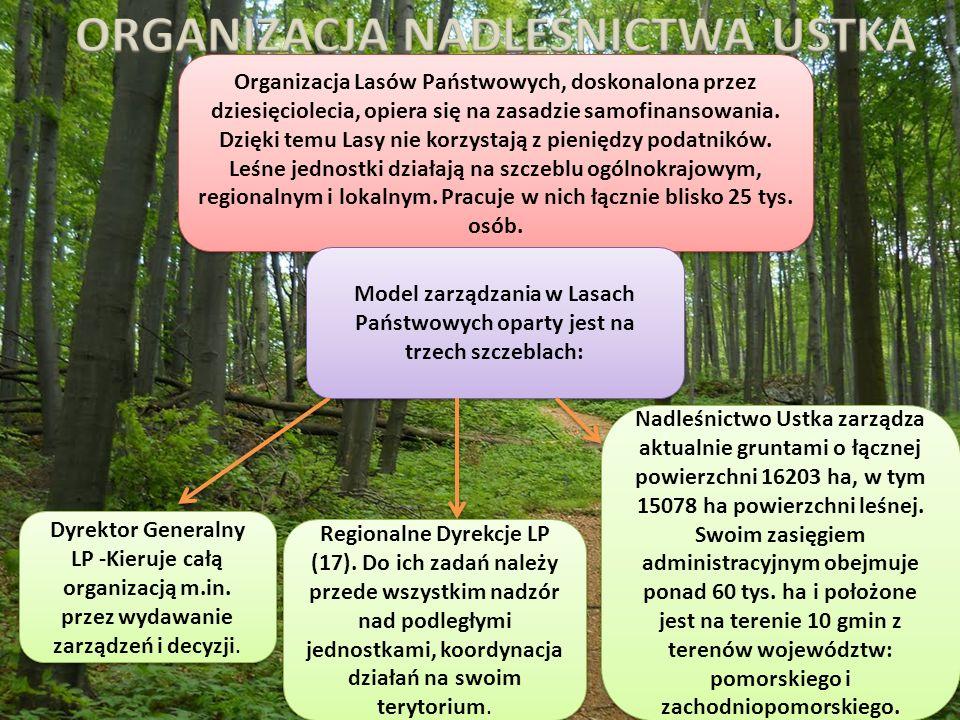 Organizacja Lasów Państwowych, doskonalona przez dziesięciolecia, opiera się na zasadzie samofinansowania.