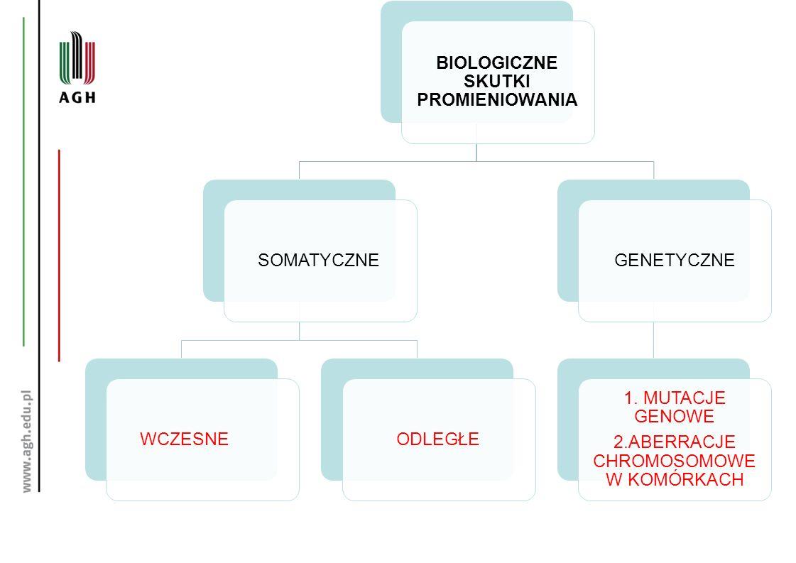 BIOLOGICZNE SKUTKI PROMIENIOWANIA SOMATYCZNEWCZESNEODLEGŁEGENETYCZNE 1. MUTACJE GENOWE 2.ABERRACJE CHROMOSOMOWE W KOMÓRKACH