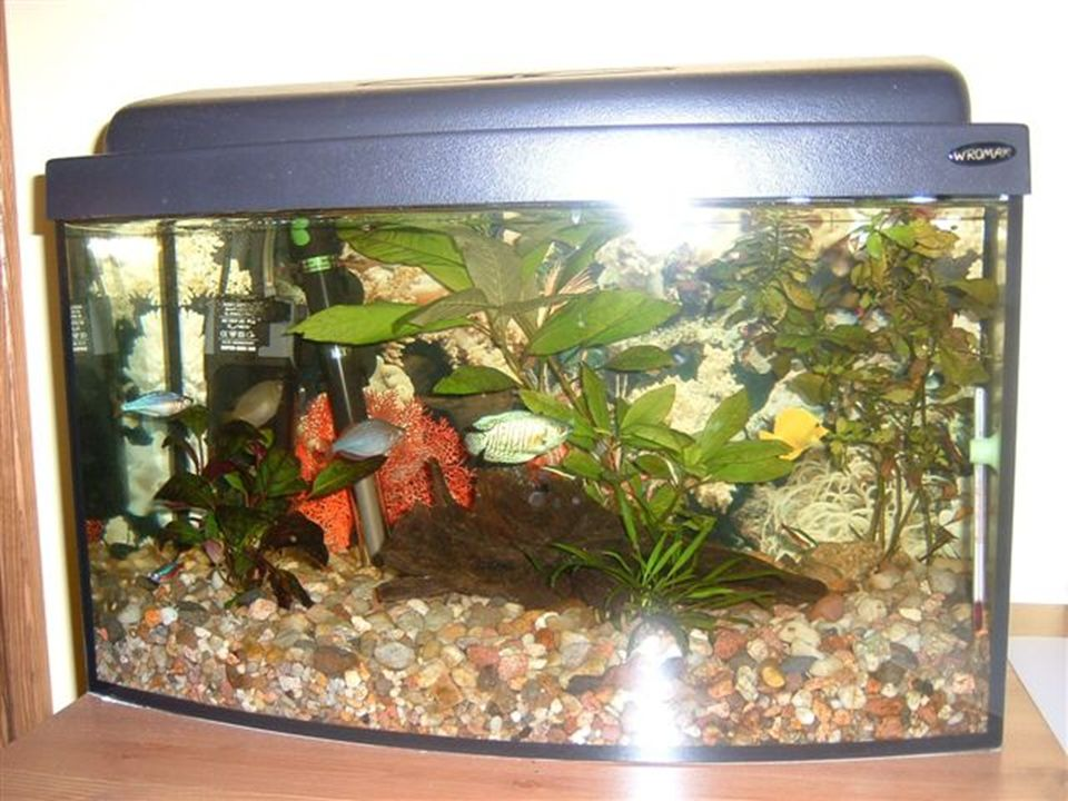 Wymiary: podstawa 50 cm x 40 cm wysokość 45 cm Kamyczki do akwarium: 1 torebka wystarcza na pokrycie 400 cm kwadratowych dna akwarium Cena 1 torebki: 1,50 zł