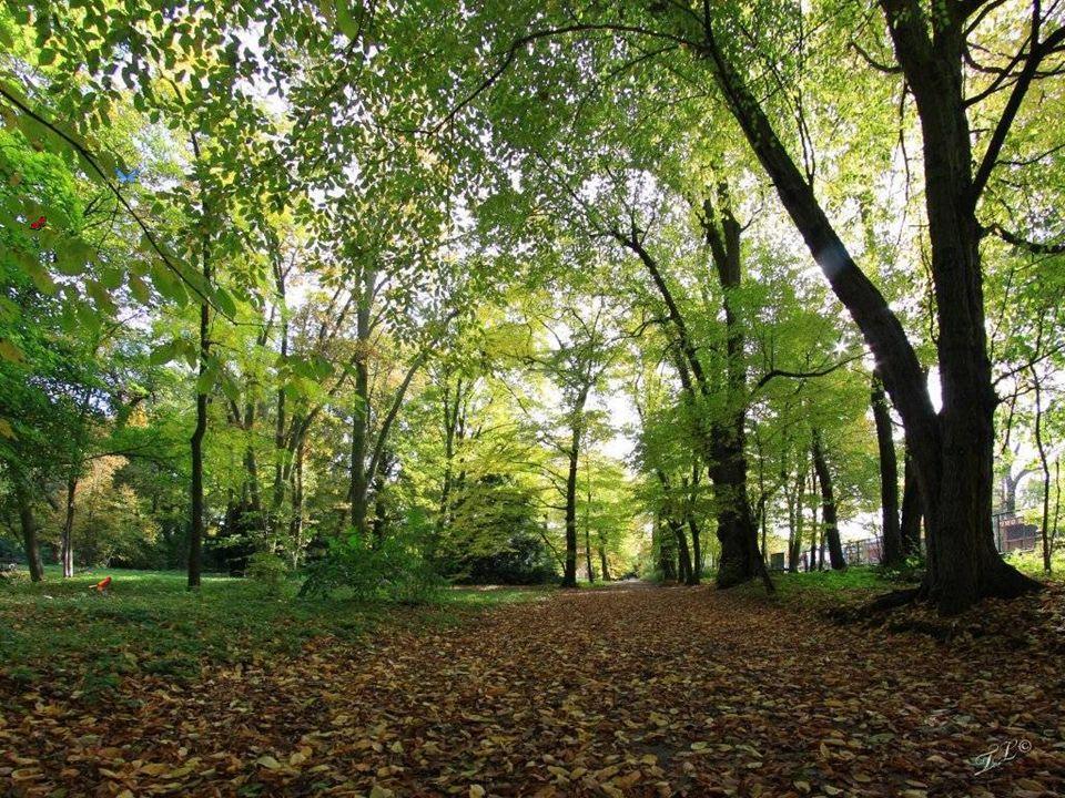 Arboretum w Kórniku założył w początkach XIX wieku Tytus Działyński z synem Janem.