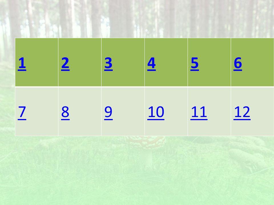 W jakiej warstwie lasu rosną grzyby? a)podszyt b)runo c)korona d)dno lasu
