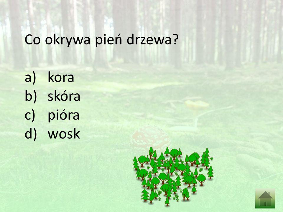 Co okrywa pień drzewa a)kora b)skóra c)pióra d)wosk