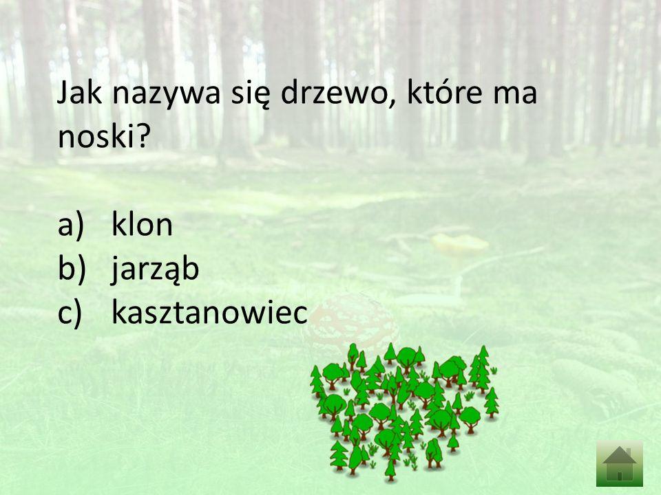 Jak nazywa się drzewo, które ma noski a)klon b)jarząb c)kasztanowiec