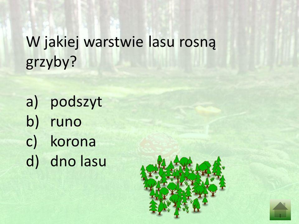 W jakiej warstwie lasu rosną grzyby a)podszyt b)runo c)korona d)dno lasu