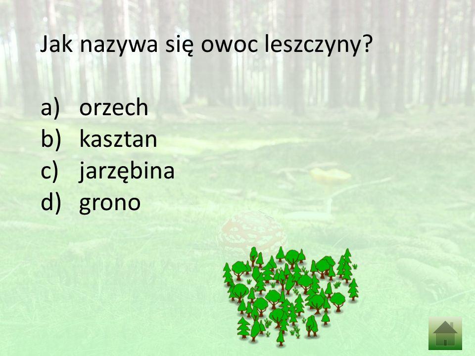 Z ilu warstw jest zbudowany las? a)3 b)4 c)5 d)2