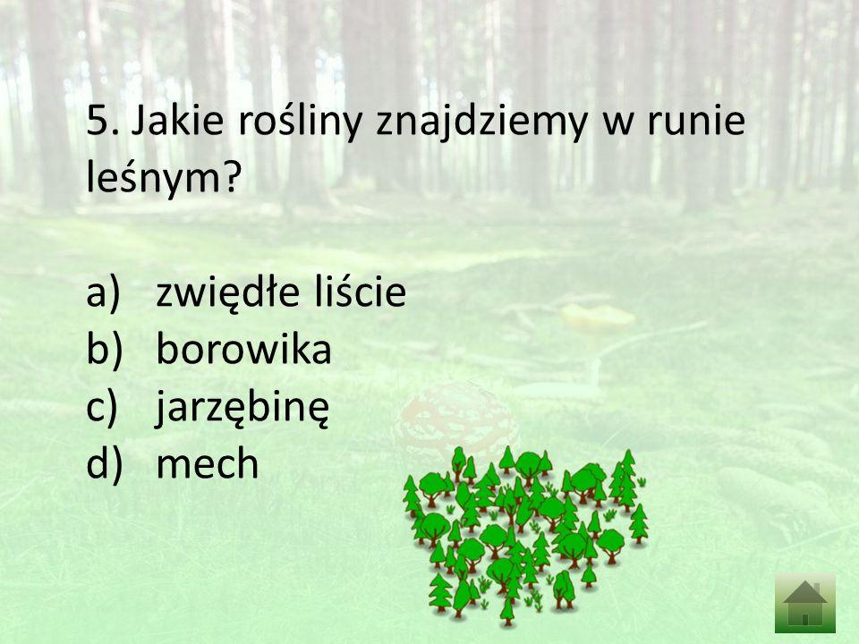 5. Jakie rośliny znajdziemy w runie leśnym a)zwiędłe liście b)borowika c)jarzębinę d)mech