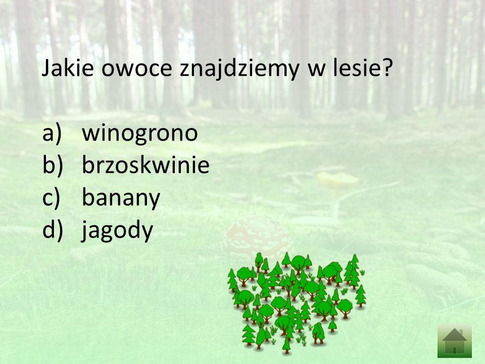 Jakie owoce znajdziemy w lesie a)winogrono b)brzoskwinie c)banany d)jagody