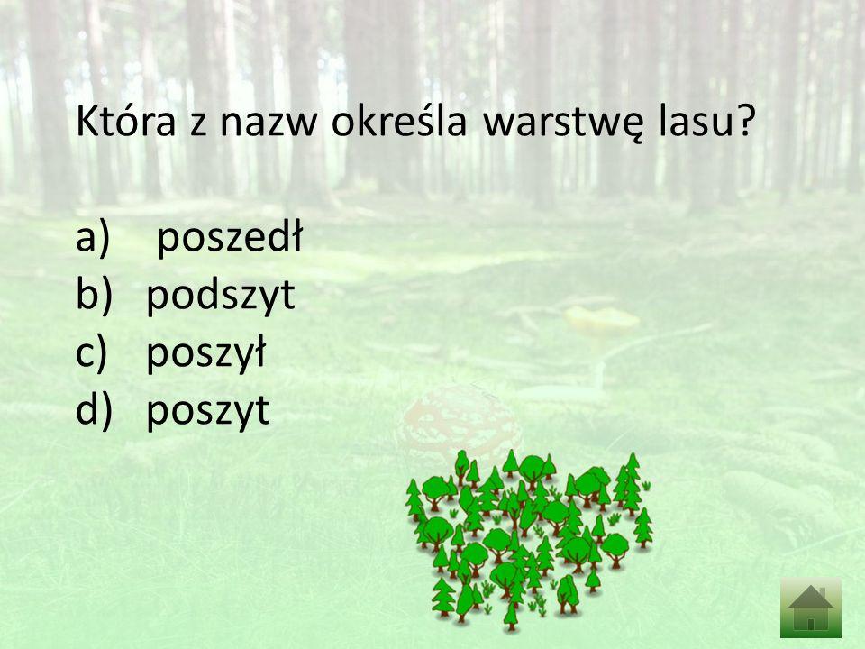 Która z nazw określa warstwę lasu a) poszedł b)podszyt c)poszył d)poszyt