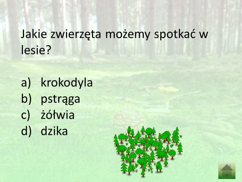 Jakie zwierzęta możemy spotkać w lesie a)krokodyla b)pstrąga c)żółwia d)dzika