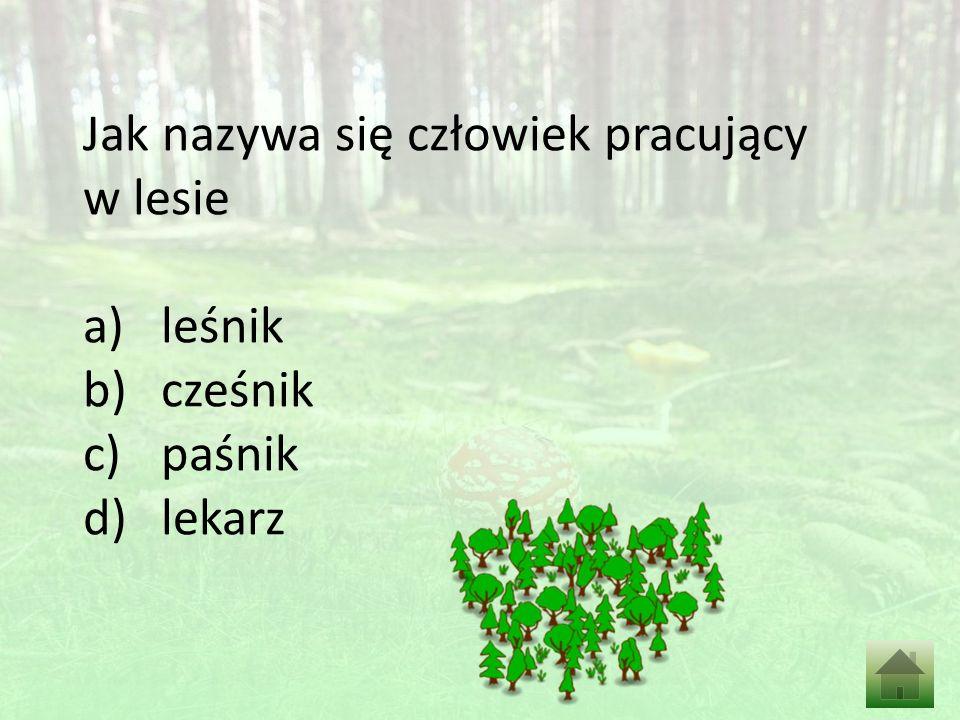 Jak nazywa się człowiek pracujący w lesie a)leśnik b)cześnik c)paśnik d)lekarz