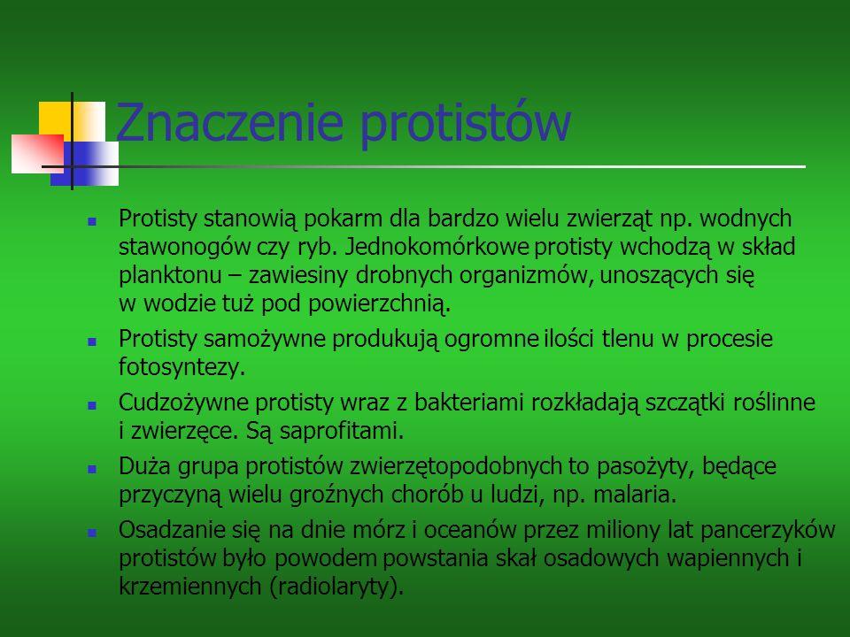 Znaczenie protistów Protisty stanowią pokarm dla bardzo wielu zwierząt np.