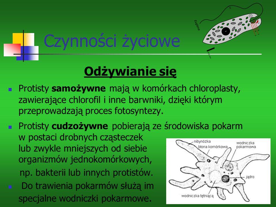 Czynności życiowe Odżywianie się Protisty samożywne mają w komórkach chloroplasty, zawierające chlorofil i inne barwniki, dzięki którym przeprowadzają proces fotosyntezy.