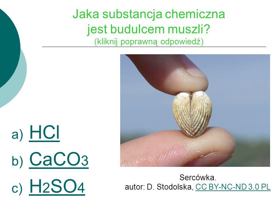 Jaka substancja chemiczna jest budulcem muszli.