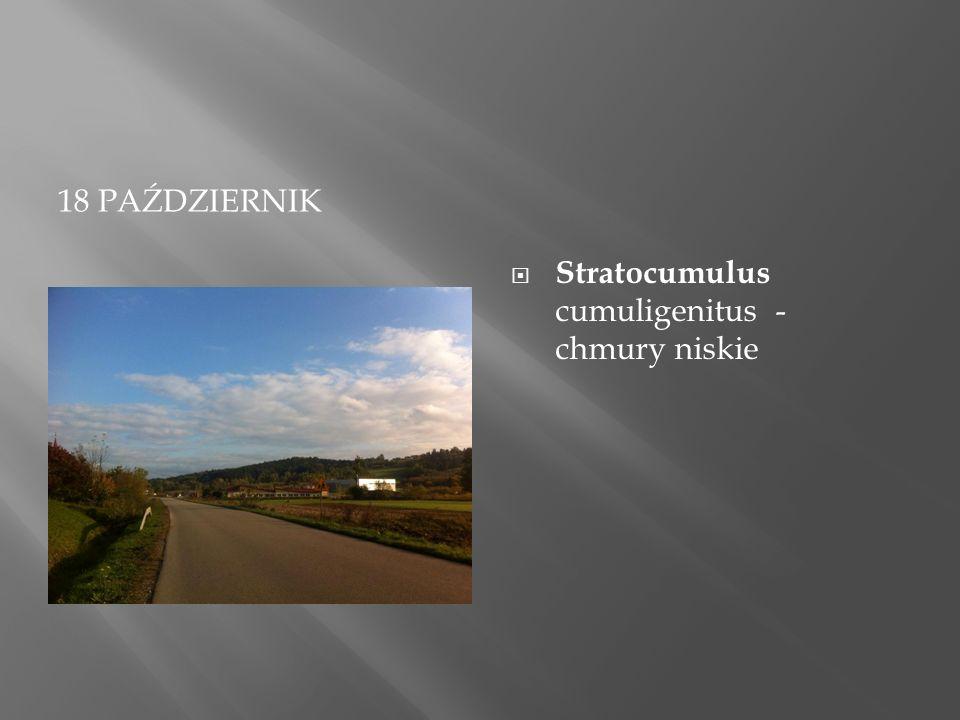18 PAŹDZIERNIK  Stratocumulus cumuligenitus - chmury niskie