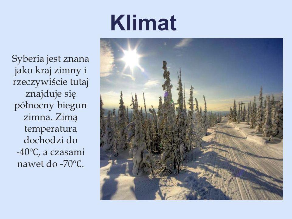 Syberia jest znana jako kraj zimny i rzeczywiście tutaj znajduje się północny biegun zimna. Zimą temperatura dochodzi do -40 ℃, a czasami nawet do -70