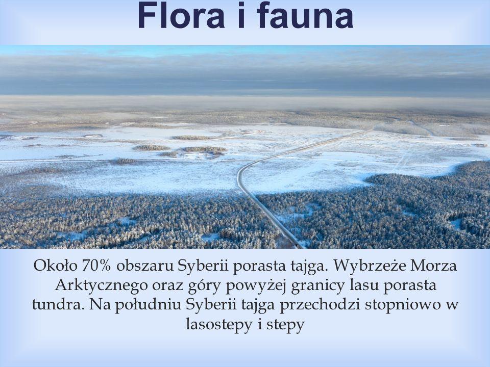  Około 70% obszaru Syberii porasta tajga. Wybrzeże Morza Arktycznego oraz góry powyżej granicy lasu porasta tundra. Na południu Syberii tajga przecho
