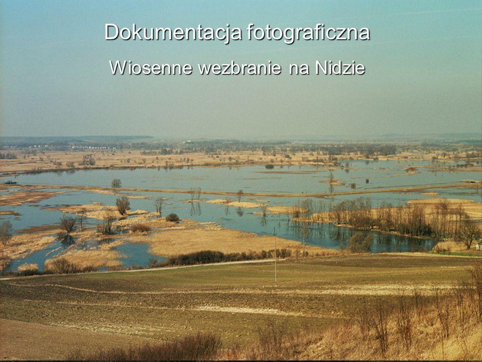 Dokumentacja fotograficzna Wiosenne wezbranie na Nidzie