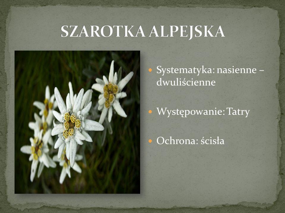Systematyka: nasienne – dwuliścienne Występowanie: Tatry Ochrona: ścisła