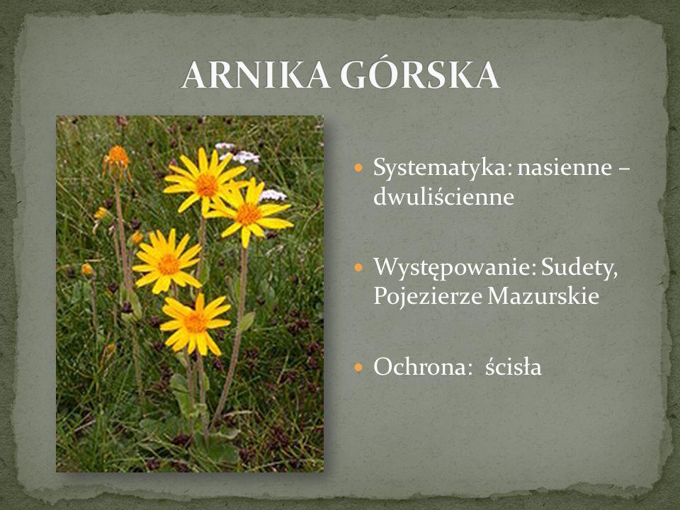 Systematyka: nasienne – dwuliścienne Występowanie: Sudety, Pojezierze Mazurskie Ochrona: ścisła
