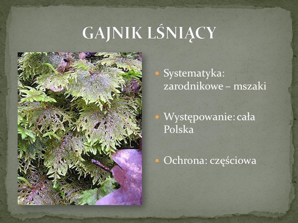 Systematyka: zarodnikowe – mszaki Występowanie: cała Polska Ochrona: częściowa