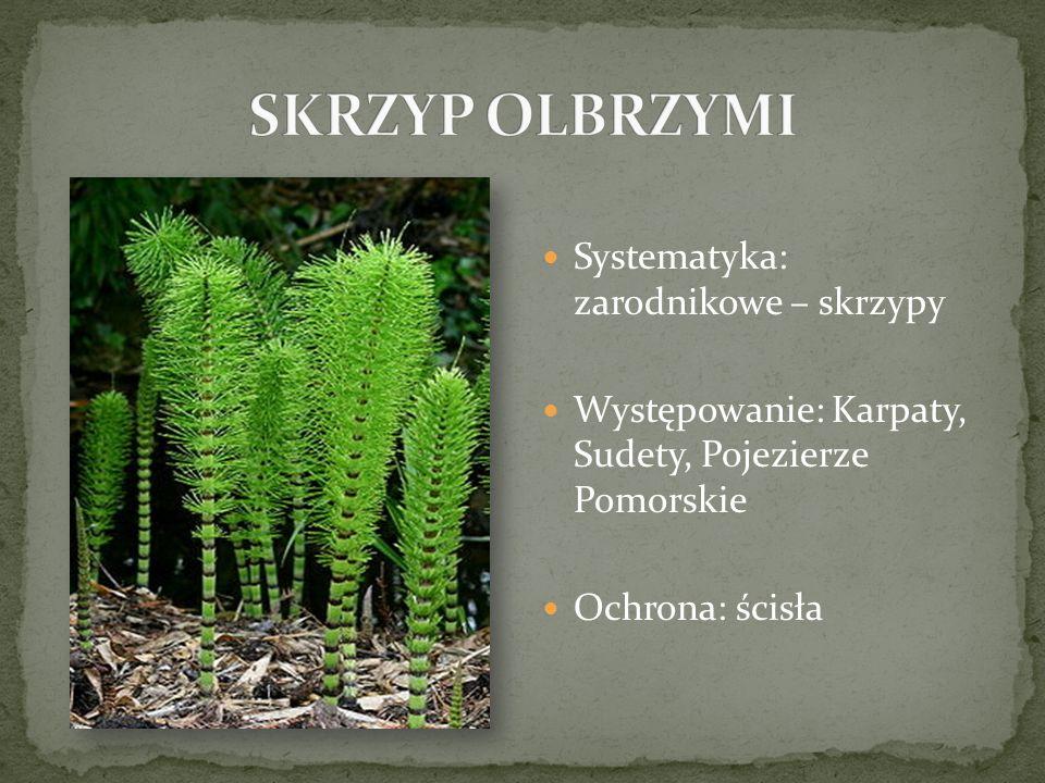 Systematyka: zarodnikowe – skrzypy Występowanie: Karpaty, Sudety, Pojezierze Pomorskie Ochrona: ścisła