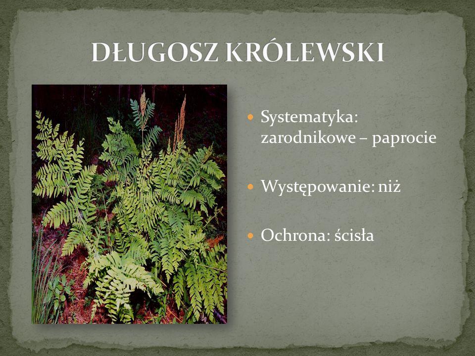 Systematyka: zarodnikowe – paprocie Występowanie: niż Ochrona: ścisła