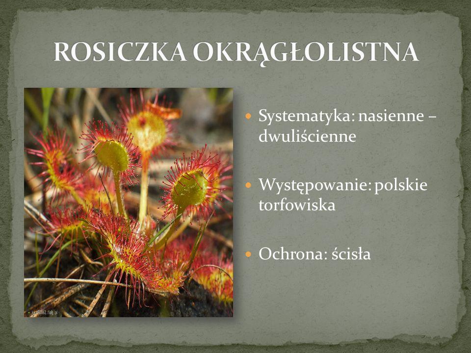 Systematyka: nasienne – dwuliścienne Występowanie: polskie torfowiska Ochrona: ścisła