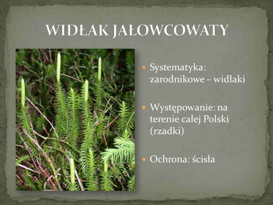 Systematyka: zarodnikowe – widłaki Występowanie: na terenie całej Polski (rzadki) Ochrona: ścisła