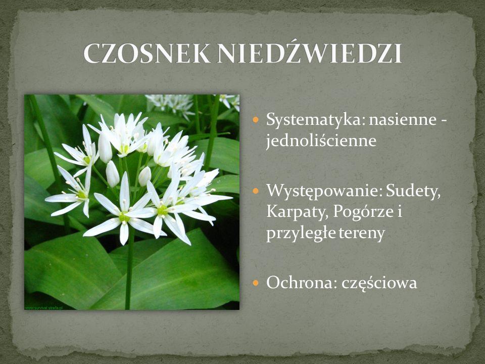 Systematyka: nasienne - jednoliścienne Występowanie: Sudety, Karpaty, Pogórze i przyległe tereny Ochrona: częściowa