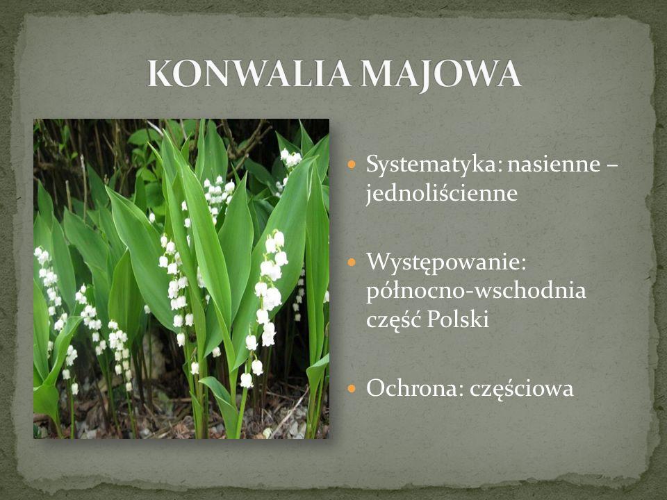 Systematyka: nasienne – jednoliścienne Występowanie: północno-wschodnia część Polski Ochrona: częściowa