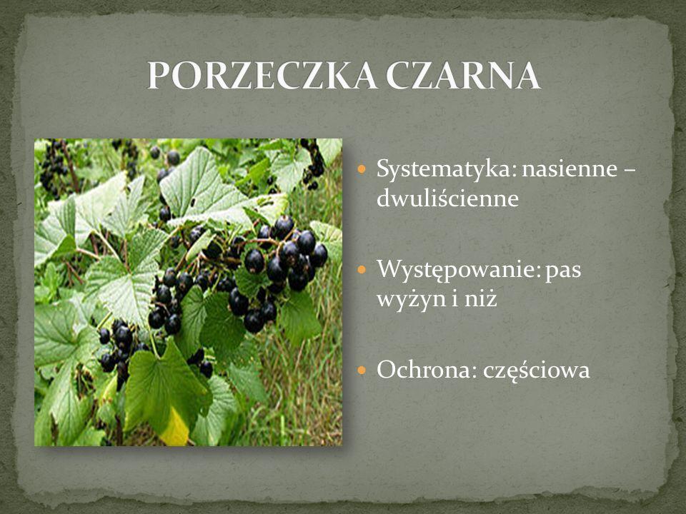 Systematyka: nasienne – dwuliścienne Występowanie: pas wyżyn i niż Ochrona: częściowa