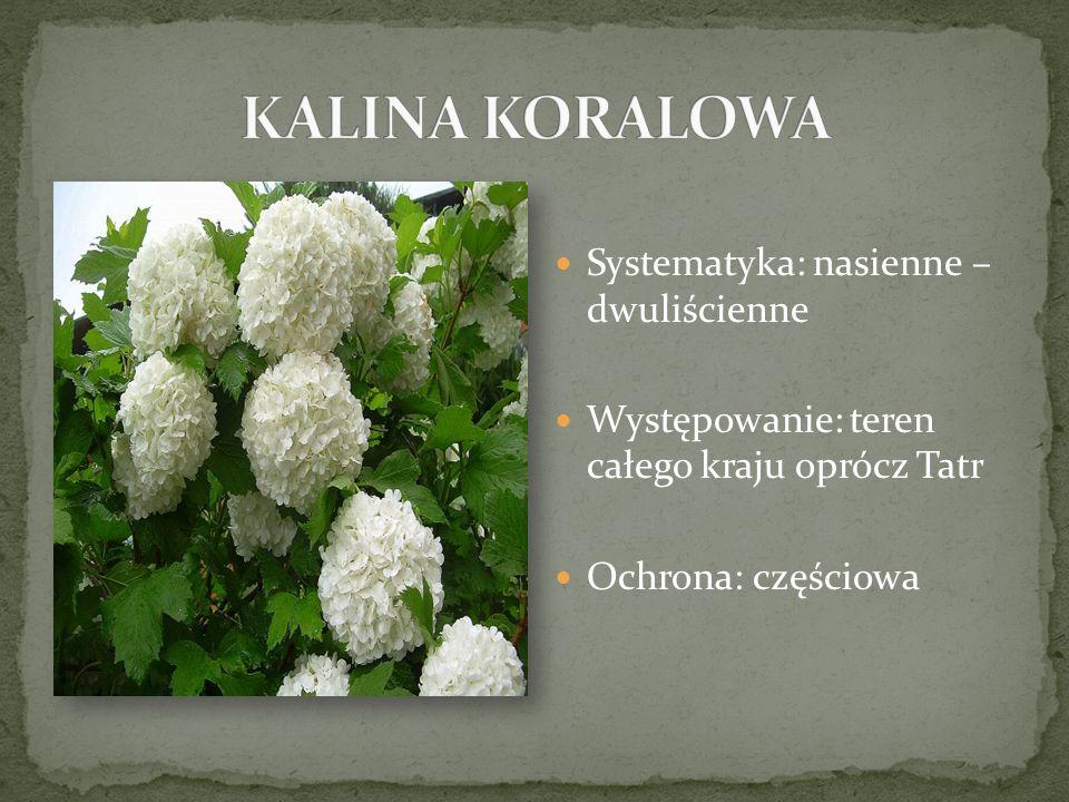 Systematyka: nasienne – dwuliścienne Występowanie: teren całego kraju oprócz Tatr Ochrona: częściowa