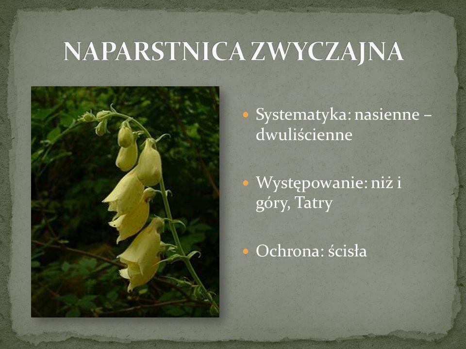 Systematyka: nasienne – dwuliścienne Występowanie: niż i góry, Tatry Ochrona: ścisła