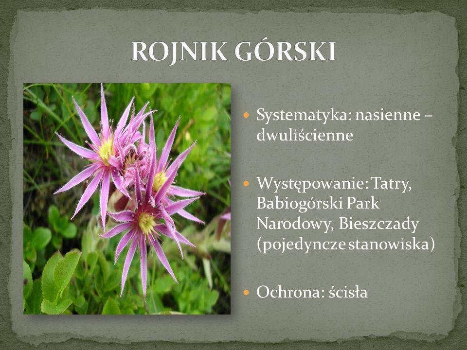 Systematyka: nasienne – dwuliścienne Występowanie: Tatry, Babiogórski Park Narodowy, Bieszczady (pojedyncze stanowiska) Ochrona: ścisła