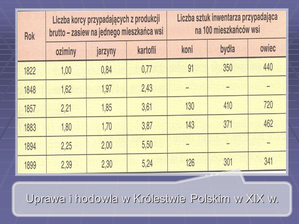 Uprawa i hodowla w Królestwie Polskim w XIX w.