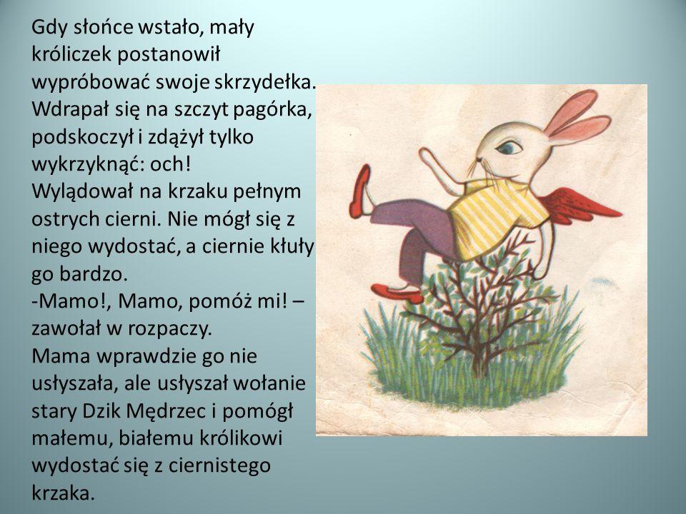 Gdy słońce wstało, mały króliczek postanowił wypróbować swoje skrzydełka. Wdrapał się na szczyt pagórka, podskoczył i zdążył tylko wykrzyknąć: och! Wy